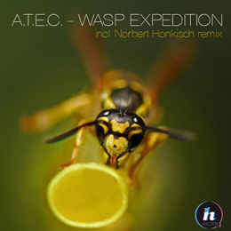 A.T.E.C. - Wasp Expedition (Norbert Honkisch remix)